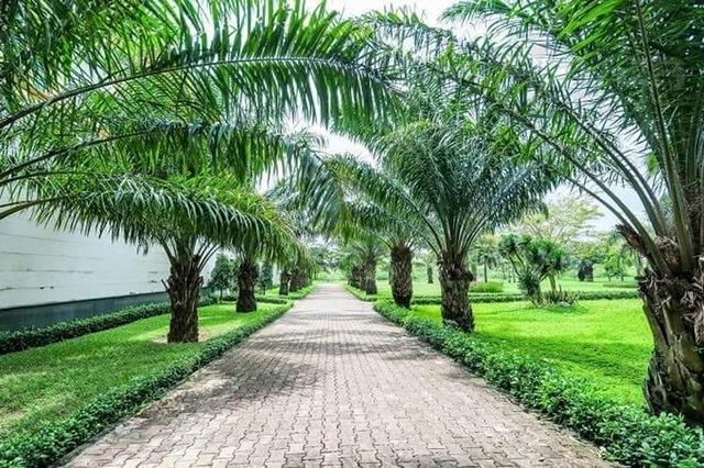 Hệ thống hồ, công viên, cây xanh giúp không khí được điều hòa